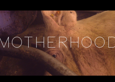 Motherhood, il trailer