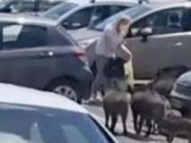 Cinghiali a Roma rubano la spesa a una signora fuori da un supermercato