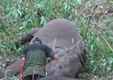 India, un fulmine fa strage di elefanti: morti 18 animali