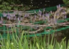 Arte: in Francia riaprono i giardini che ispirarono Monet