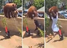California, teenager affronta un orso per salvare i suoi cani