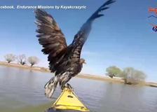 Due aquile stanno annegando nel Danubio, salvate da una coppia in kayak