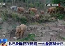 Cina: branco di elefanti nello Yunnan, il viaggio continua