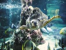 Giornata mondiale degli oceani, i pesci (con le voci dei vip) contro il riscaldamento globale