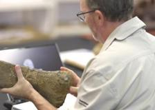 Identificata una nuova specie di dinosauro: è il più grande mai esistito