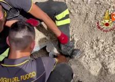Gatto incastrato nel tubo di scarico di un tombino, salvato dai Vigili del fuoco