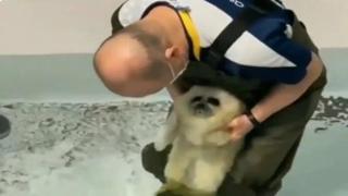 Il cucciolo di foca entra nell'acqua per la prima volta: il filmato da 30 milioni di clic
