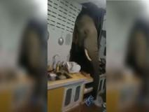 Thailandia: l'elefante affamato sfonda il muro della cucina e rovista nella dispensa