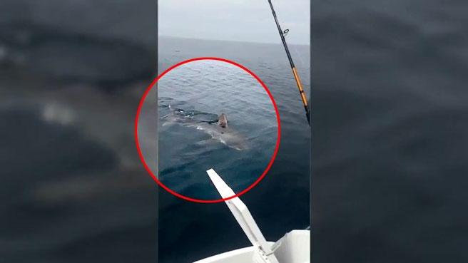 Squalo di tre metri gira intorno alla barca del pescatore, la reazione è inaspettata