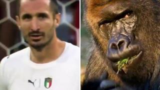 King Kong Chiellini e il paragone con il gorilla: il video sul suo profilo Twitter in stile Superquark