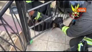Un cucciolo di pastore tedesco salvato dai vigili del fuoco a Isernia