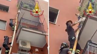 Un cagnolino si sporge pericolosamente dal terrazzo: il salvataggio dei vigili del fuoco