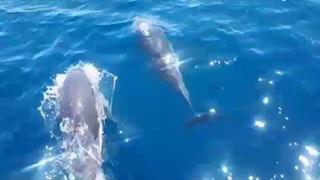Un branco di delfini saluta i bagnanti a largo di Taranto