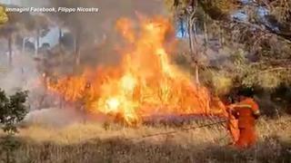 Incendi in Sicilia, brucia da tre giorni zona boschiva nell'Ennese