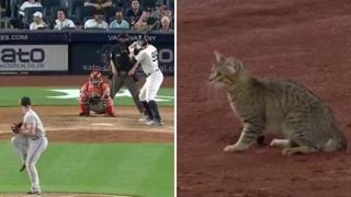 Un gatto invade lo Yankee Stadium, dagli spalti tifano per lui e fischiano gli steward