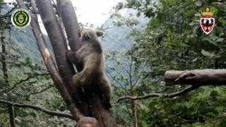 Cucciolo di orso resta incastrato tra due alberi: il video del salvataggio