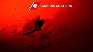 Nove tartarughe «Caretta Caretta» nate a Jesolo