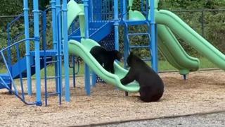 La scena adorabile: mamma orsa e il suo piccolo giocano sullo scivolo