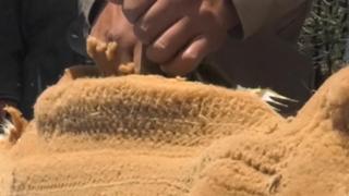 Bolivia: ecco da dove arriva la lana più cara al mondo
