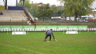 L'Italia vince tutto anche... a quattro zampe: pioggia di ori alle finali di Disc Dog