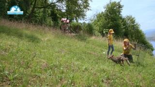 La storia di «Robin Hood», la volpe salvata dai volontari del Cras