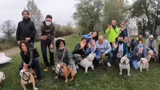 Milano, successo per il Bulldogday: oltre 200 esemplari inglesi e 500 appassionati
