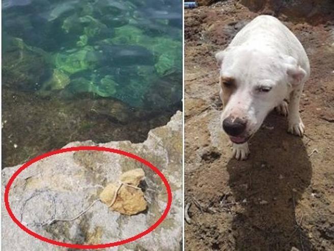 getta cane in mare con pietra al collo ma l'animale si libera e si salva - il corriere