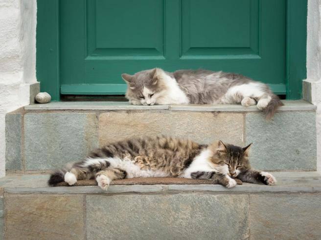Syros Accarezzatore Di Gatti Cercasi Lannuncio Diventa Virale