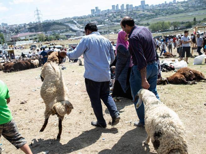 Calendario Islamico 2020.La Festa Islamica Del Sacrificio E Le Polemiche Sulle Macellazioni