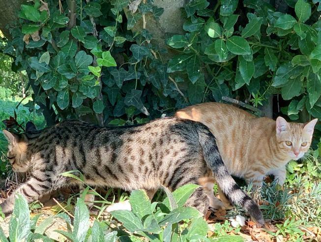 gatti sito di incontri datazione di un residente medico femminile