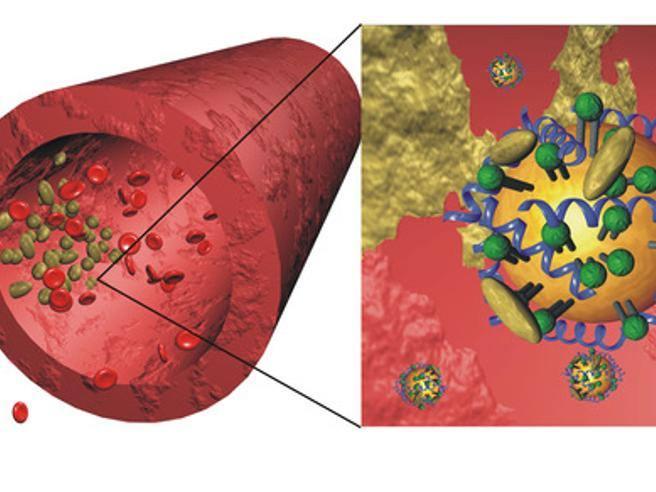 Alti livelli di colesterolo da giovani possono causare seri problemi cardiovascolari nella mezza età